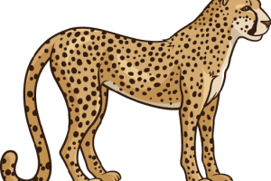clip art library stock Cheetah clipart.  collection of pictures.