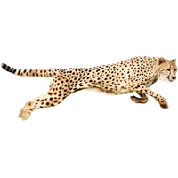 picture library Cheetah clipart. Download hq png image