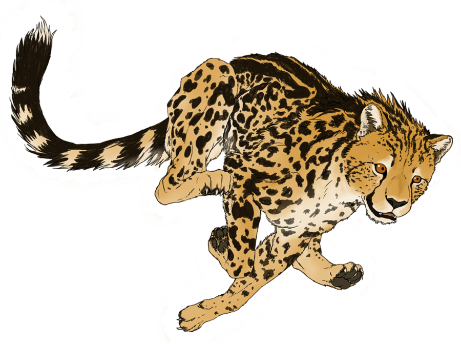 vector transparent library Drawing cheetahs cute baby. Cheetah clipart tail free