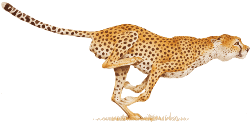 freeuse Cheetah png images free. Leopard clipart claw.