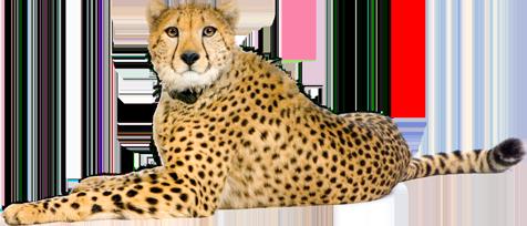 banner freeuse Png . Cheetah clipart cheetah cub.