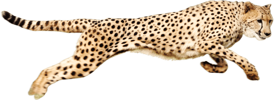 png free library Cheetah Running transparent PNG