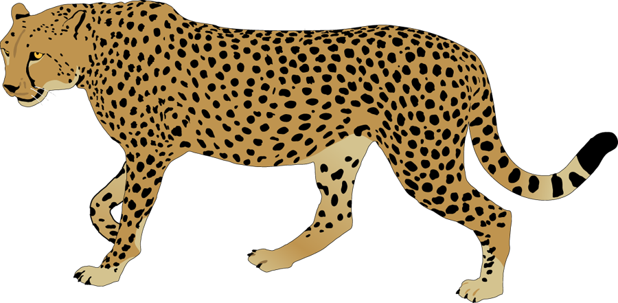 graphic transparent download Cheetah clipart rainbow. Free collection download and.