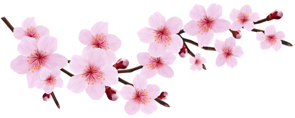 png freeuse library Blossom Spring Pink Twig Transparent PNG Clip Art Image