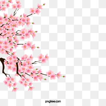 clip free Blossom png vector psd. Cherry blossoms clipart.