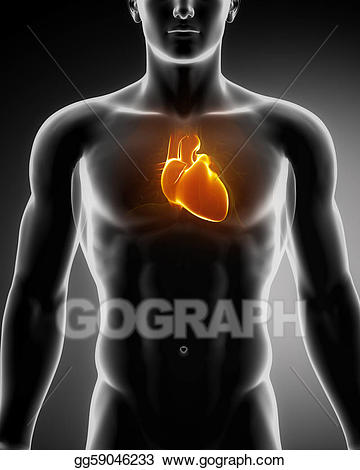 clip transparent stock Drawing human heart glowing. Chest clipart male chest.