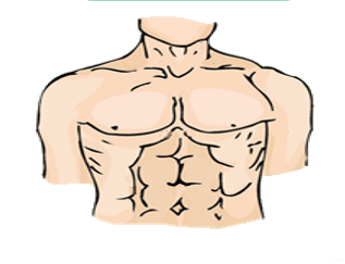 clip freeuse Chest clipart male chest.  collection of body.