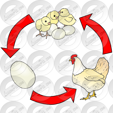 graphic free stock Life picture for classroom. Chicken clipart cycle.
