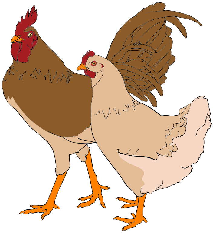png freeuse library Chicken clipart rooster. File and hen svg