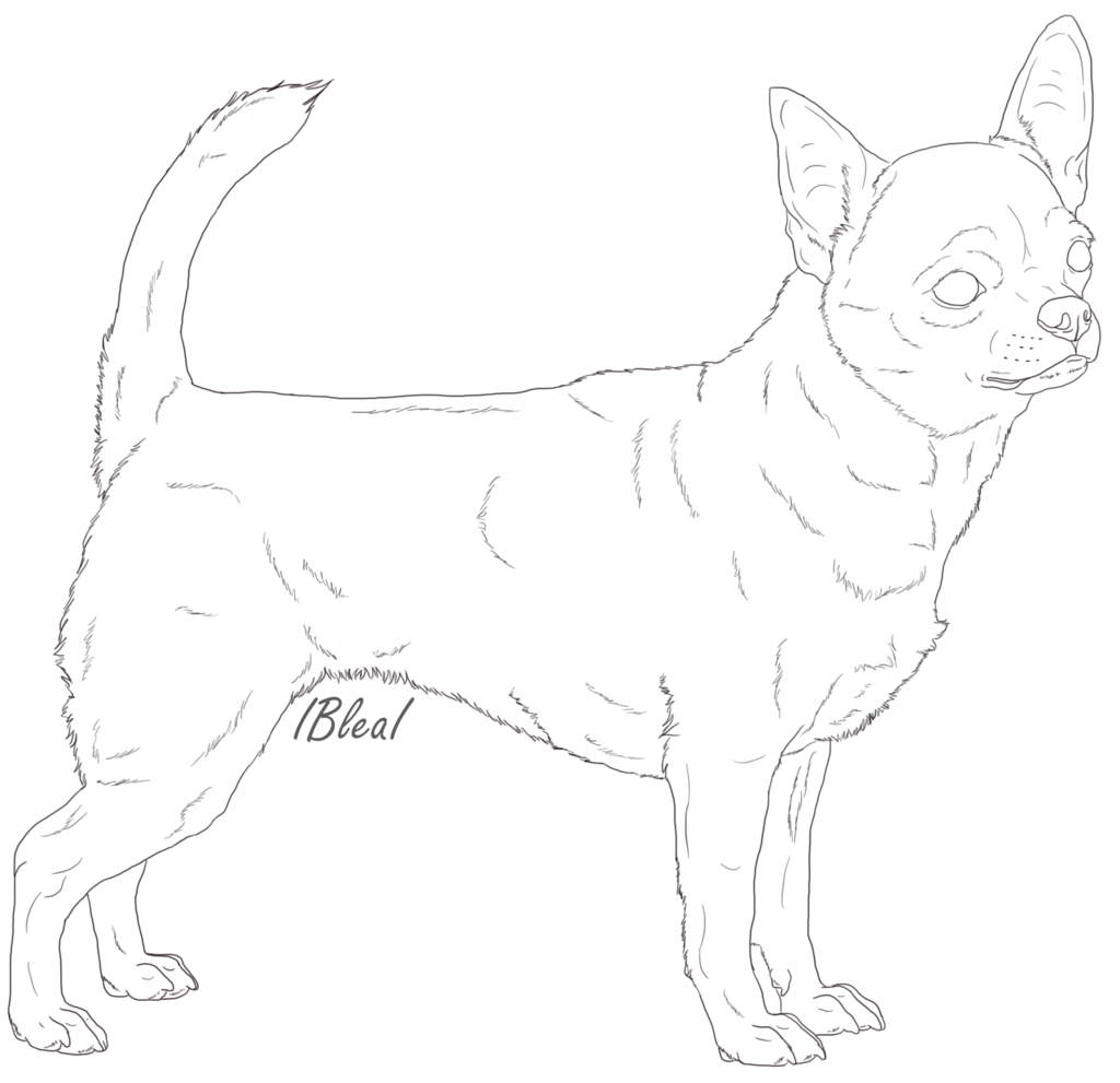 clip art black and white library Chihuahua clipart line. Drawing at getdrawings com.