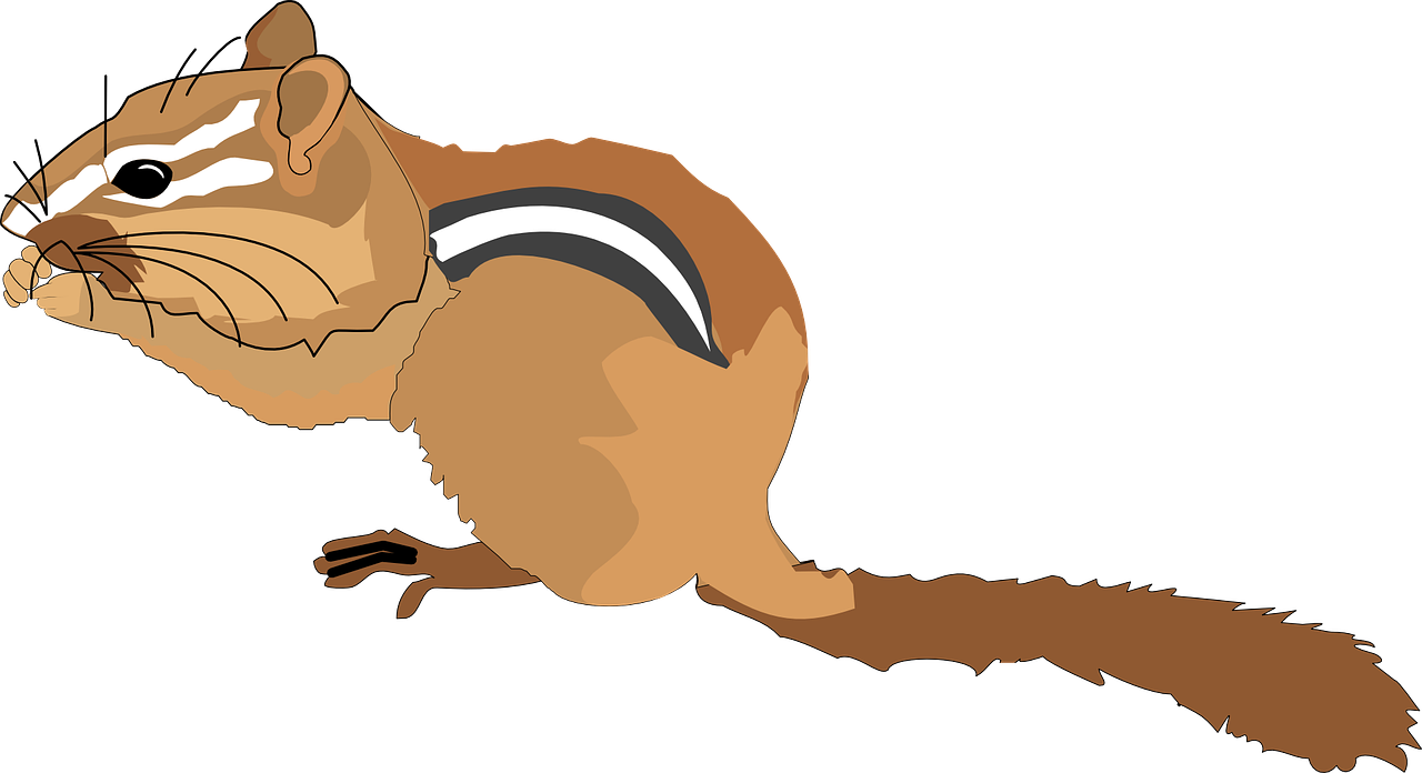 jpg freeuse Chipmunk clipart. Small squirrel free on