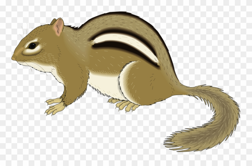 jpg library library Chipmunk clipart. Clip art png download.