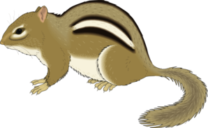 banner black and white library Chipmunk clipart. Staying still clip art