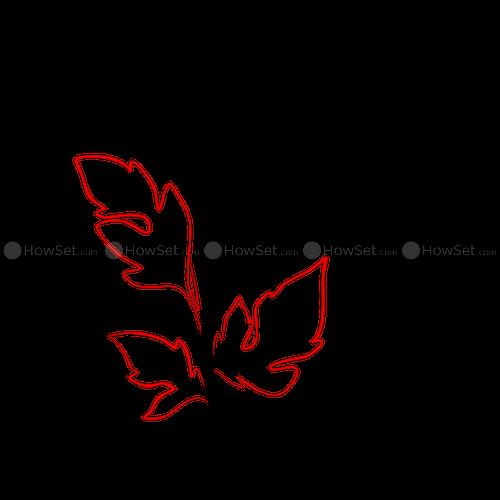 freeuse Chrysanthemum flower at getdrawings. Chrysanthemums drawing
