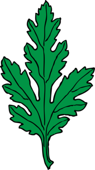 vector royalty free download Chrysanthemum Japan How to Draw