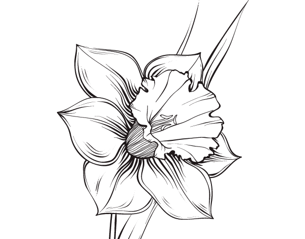 vector black and white stock Resultado de imagen para lilium para dibujar
