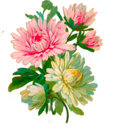 vector royalty free download Pin by Lora Wise on transparent flowers