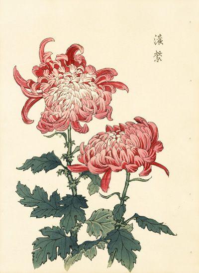 freeuse Keika hasegawa chrysanthemum wood. Chrysanthemums drawing oriental flower