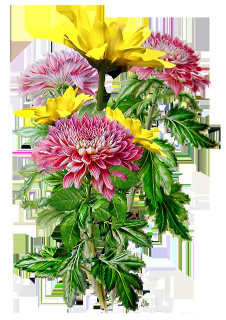 clip art library Bouquets fleurs tube flowers. Chrysanthemums drawing oriental flower