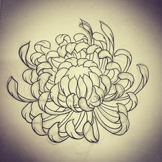 image royalty free Chrysanthemums drawing oriental flower.  best chrysanthemum images