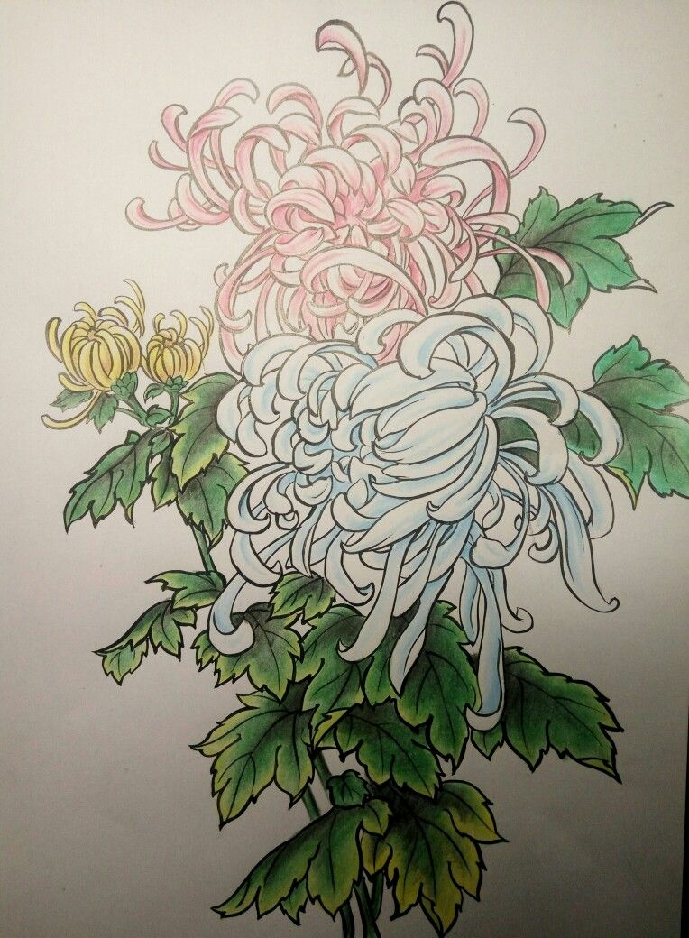 clipart free library Other flora tattoos in. Chrysanthemums drawing oriental flower
