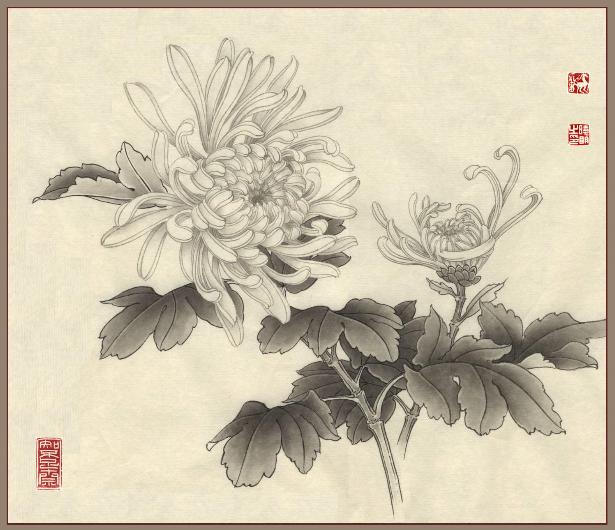 clip transparent Chrysanthemum in chinese painting. Chrysanthemums drawing oriental flower