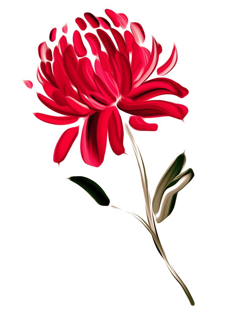 png transparent stock Australia Flower Painting Waratah Chrysanthemum