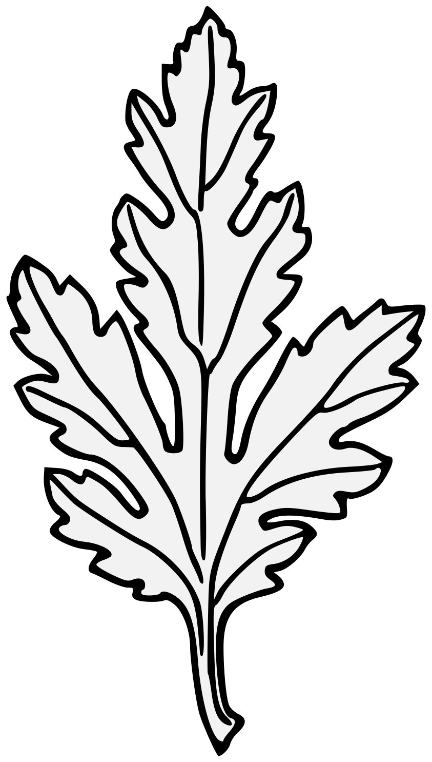 banner transparent stock chrysanthemum vector leave #91704253