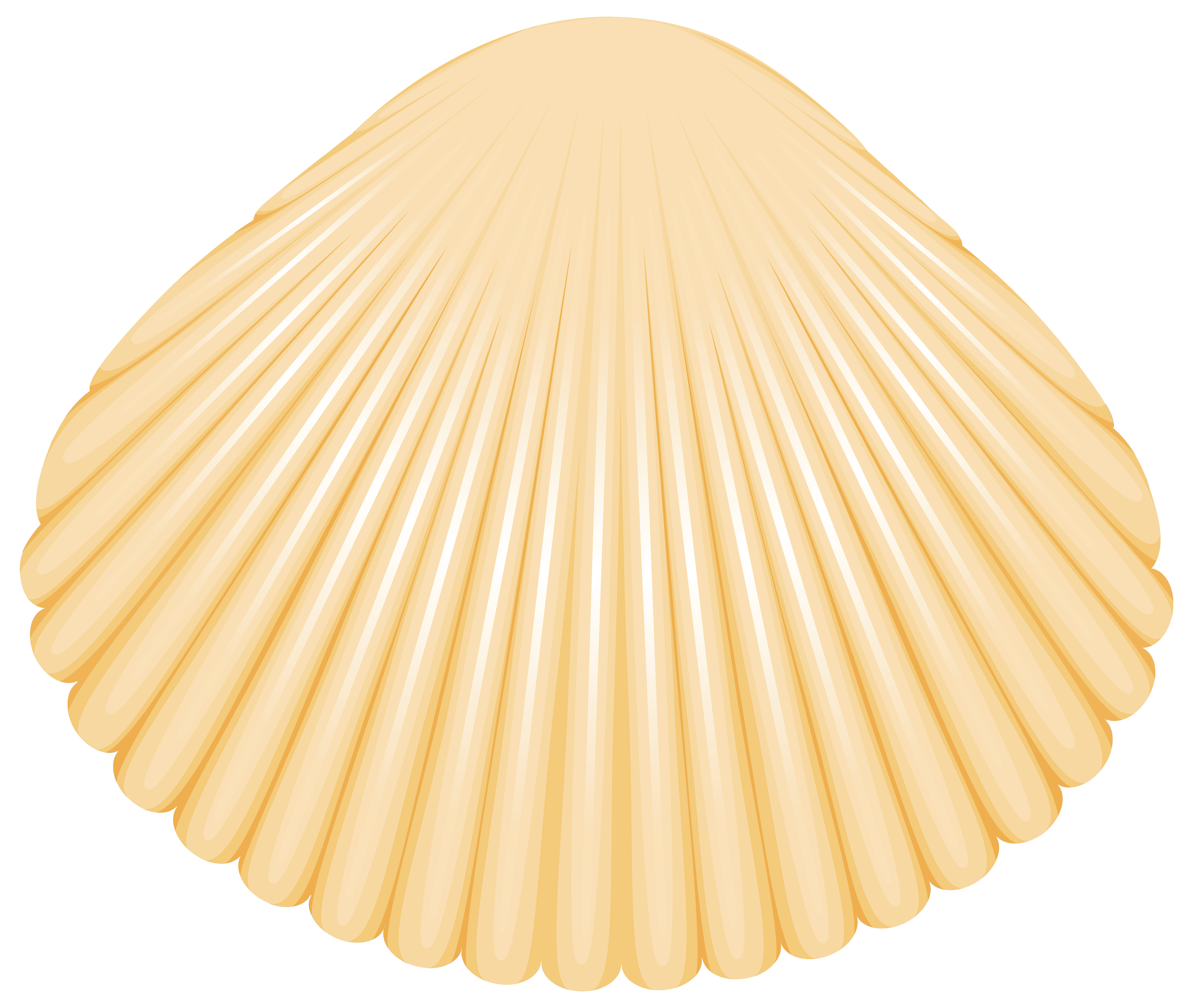 clipart black and white Clam clipart. Shell png clip art.