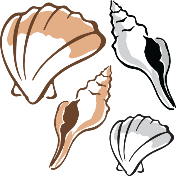 image black and white download  shells clip art. Clam clipart