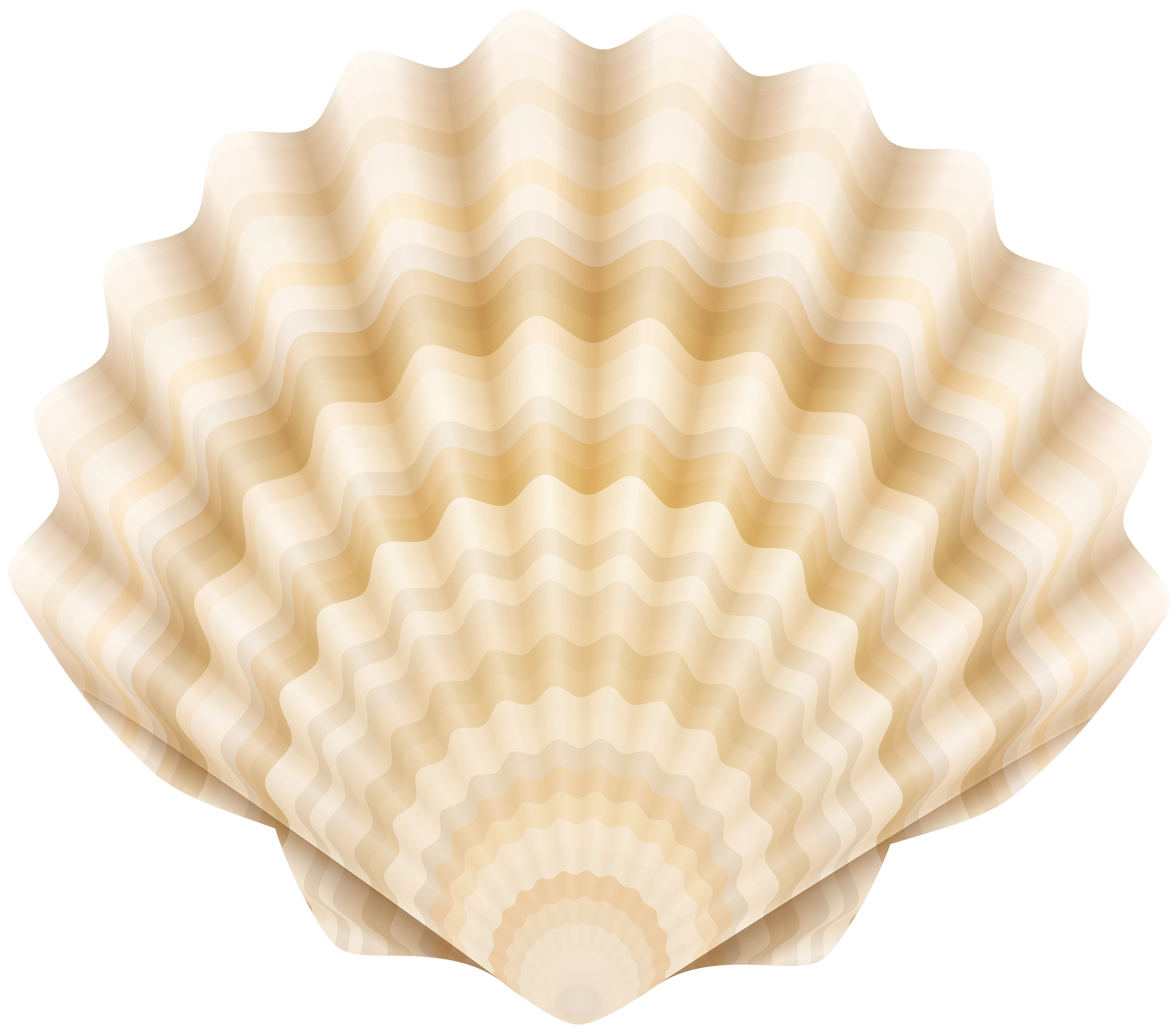 image free download Clam clipart clamshell. Clip art of just.