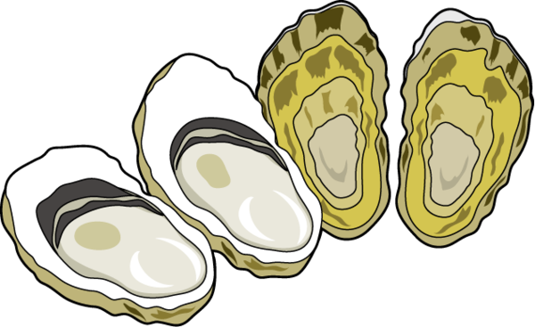 png transparent seafood clipart oyster #82948478