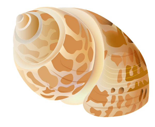 picture transparent stock Transparent Seashell PNG Picture