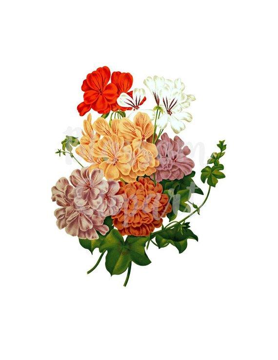 vector transparent library Digital download vintage flower. Classic clipart floral.