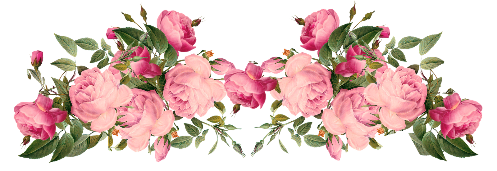 picture transparent download Free flower borders clipart. Pink rose transparent floral