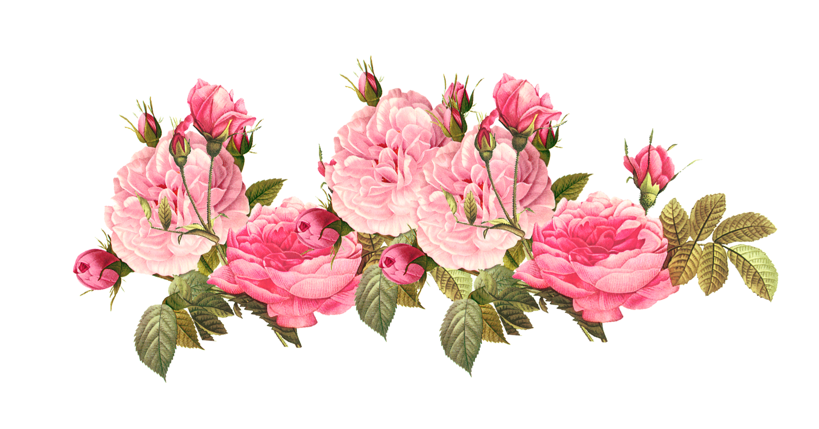 graphic transparent stock Vintage rose images google. Classic clipart floral.