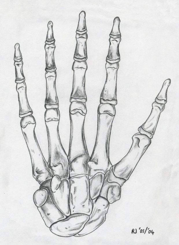transparent stock Skeleton hand drawing