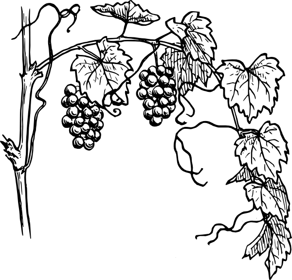 picture royalty free library Black and white vine. Climber clipart leaf.