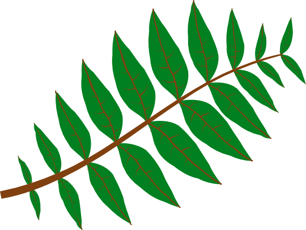 png transparent Climber clipart leaf. Jungle leaves clip art.