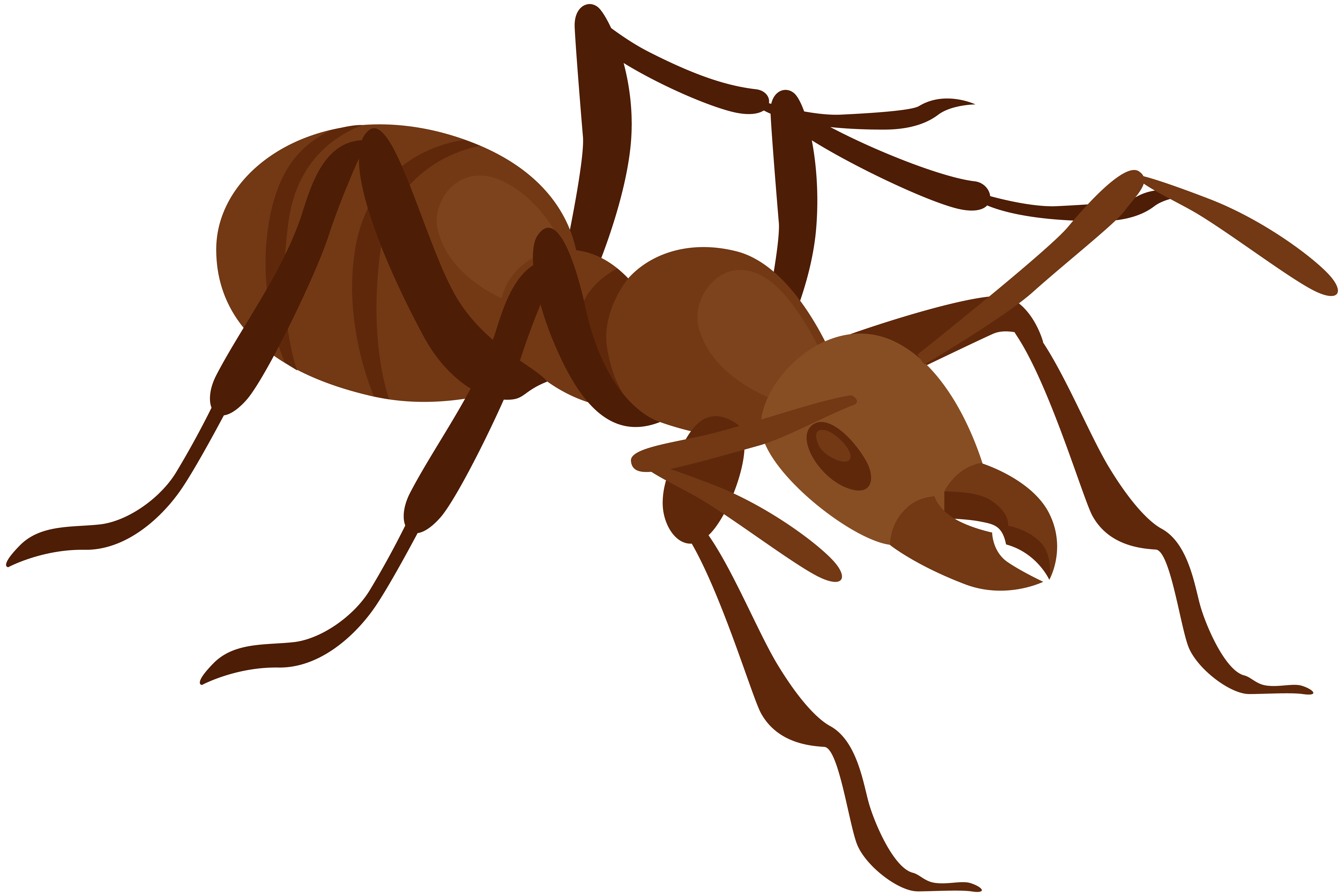 jpg library Ant at getdrawings com. Clipart ants