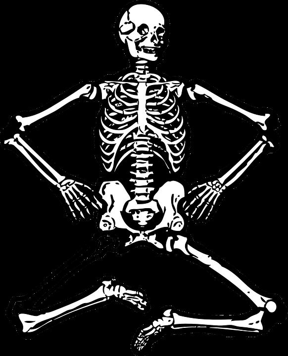 image transparent library Clipart biology. Bones science skeleton human.