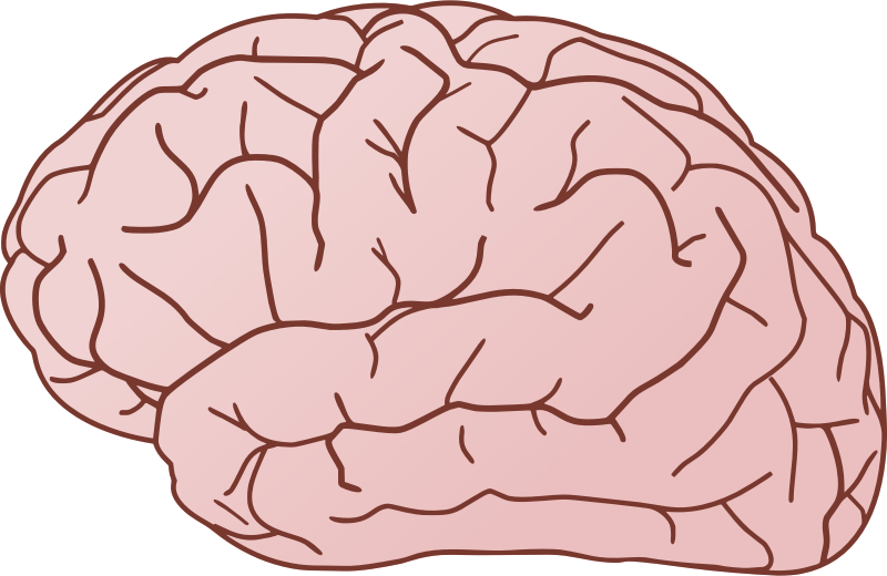 picture library stock Brain free to use clip art