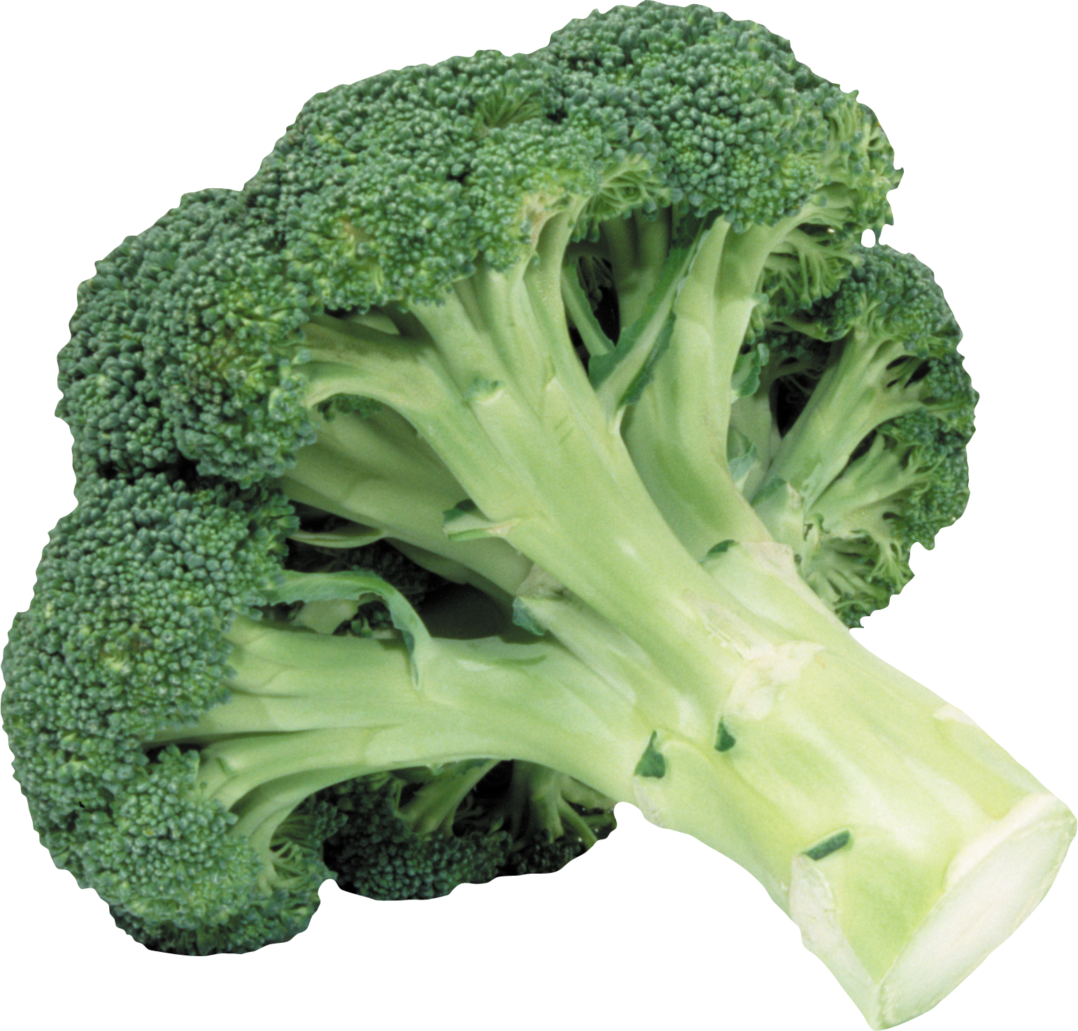 clipart black and white library Broccoli One