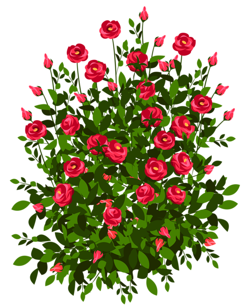 graphic transparent library Red Rose Bush PNG Clipart Picture