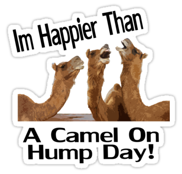 clipart royalty free library Hump Day PNG HD Transparent Hump Day HD