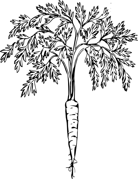 clip freeuse stock Clipart carrots black and white. Carrot clip art at.