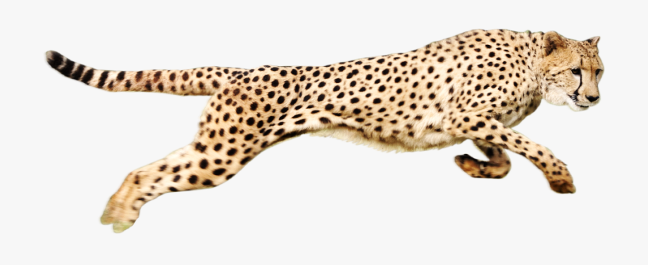 png Cheetah Png