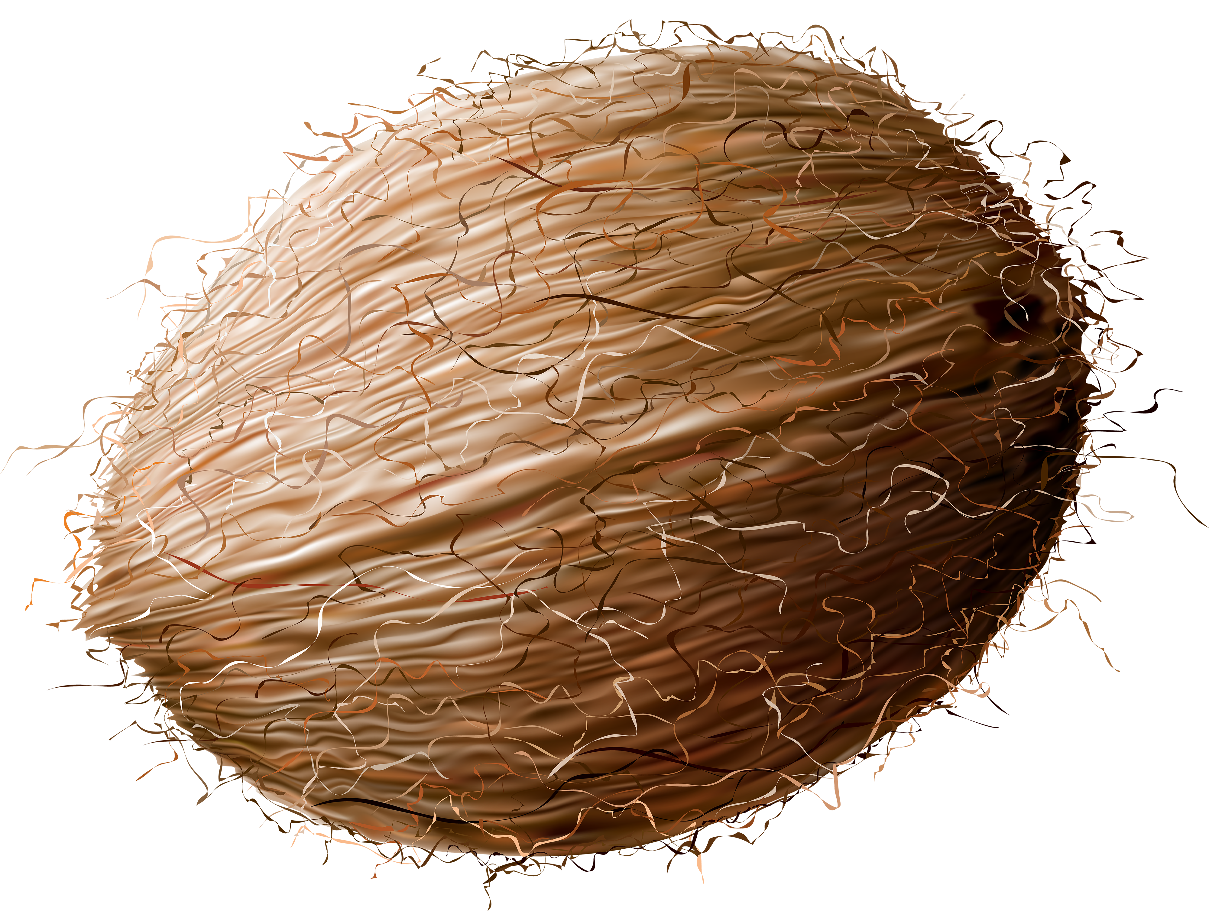 svg free download Coconut Transparent PNG Clip Art Image
