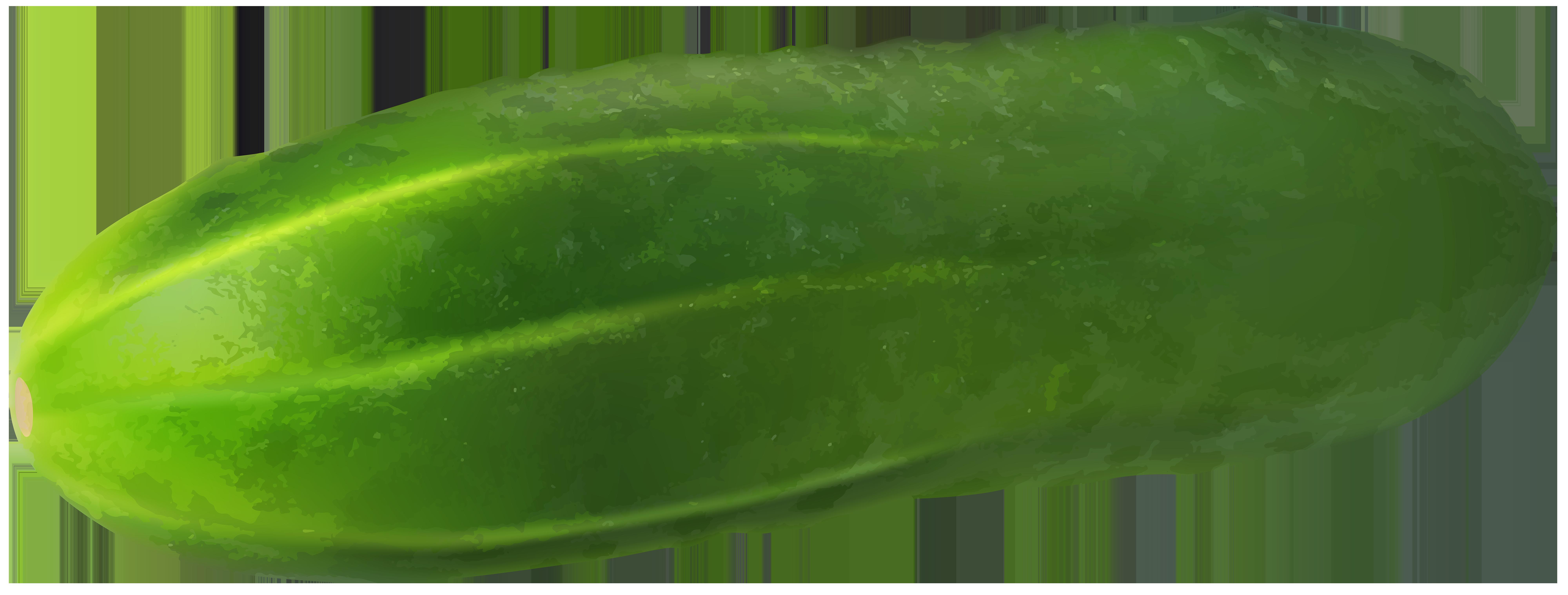 vector library stock Gherkin transparent png clip. Cucumber vector timun