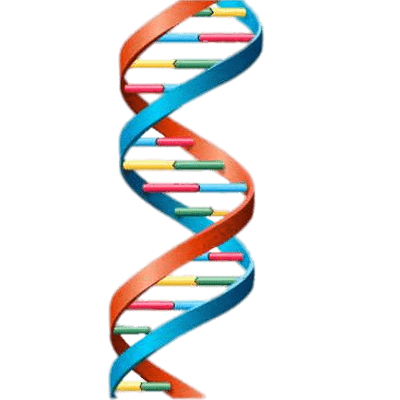 vector download DNA String Model transparent PNG